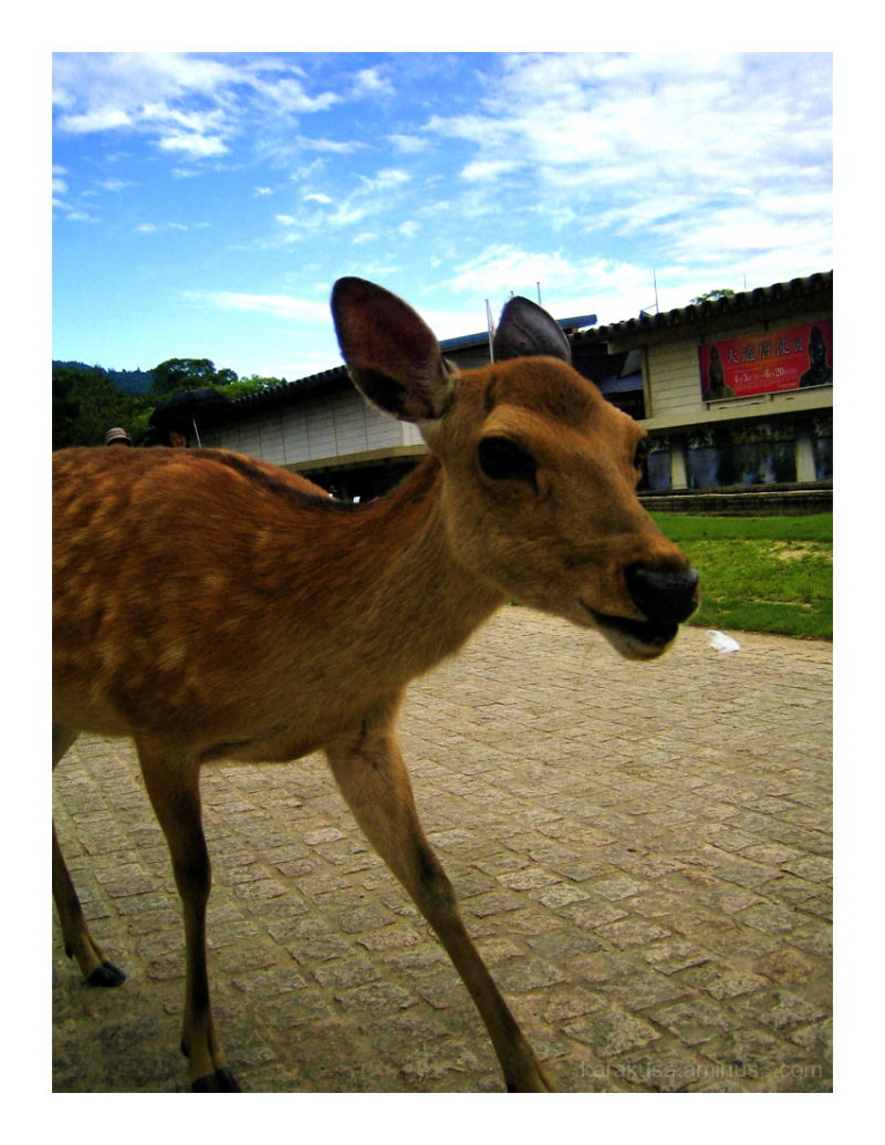 symbol of Nara #2