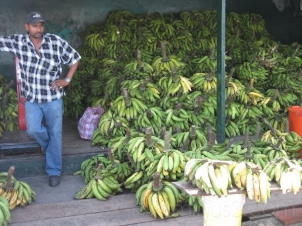bananas in Georgetown Guyana
