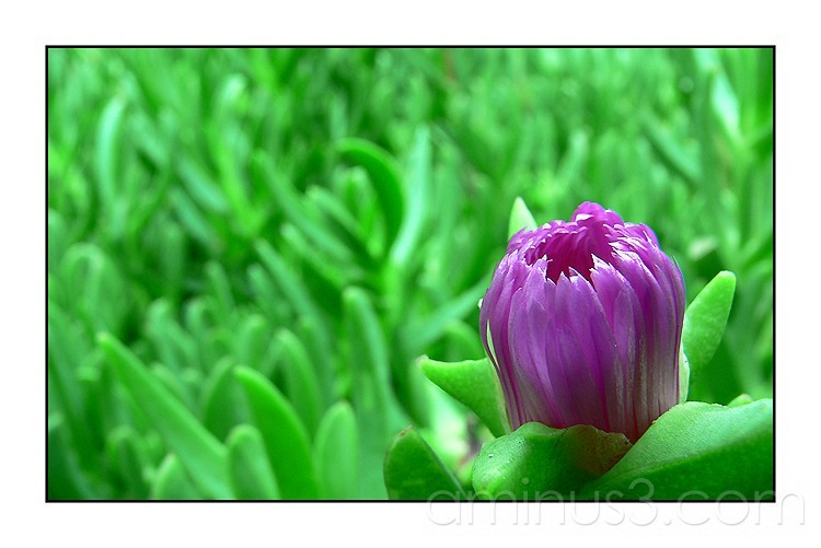 Macro of a flower