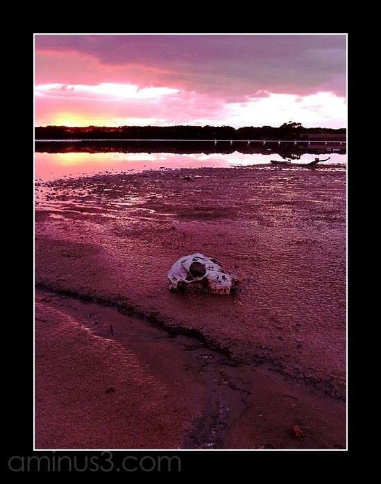 Dawn on Kangaroo Island