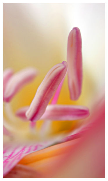 Intimate flower macro