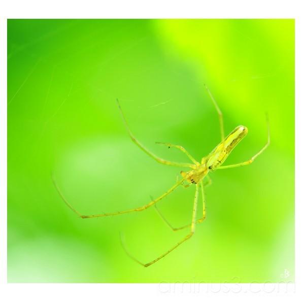 Spider woman