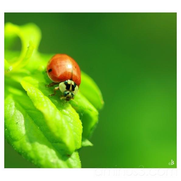 A new dress for ladybird