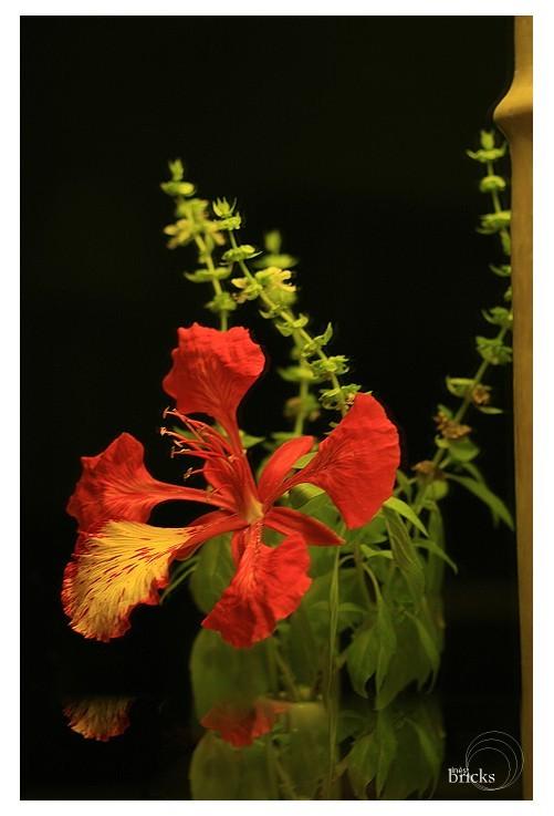 Des fleurs qui flamboient