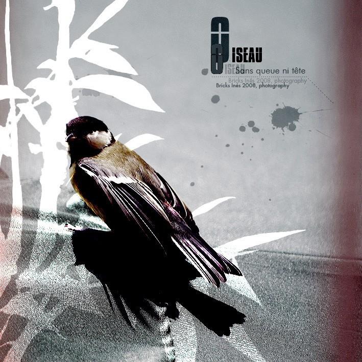 Oiseau sans queue ni tête