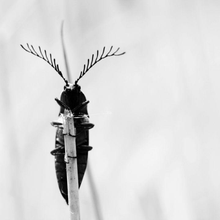 La troisième antenne