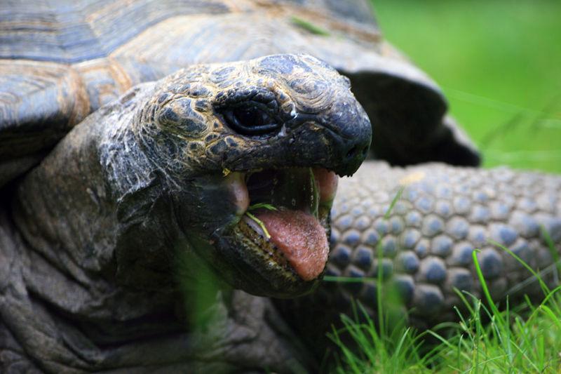 Впадают ли в спячку черепахи в домашних условиях