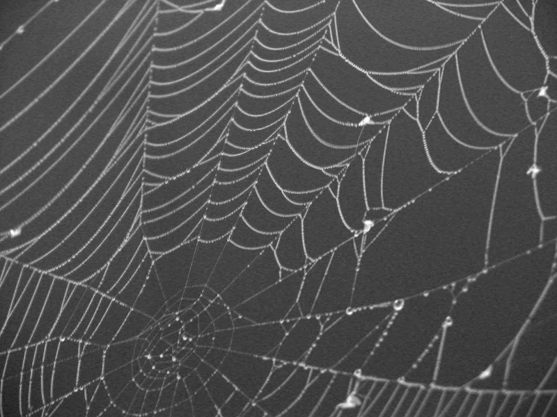 Spiderwebs 1
