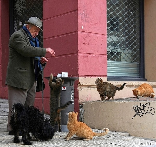 Man feeding the cats in a Lyon street
