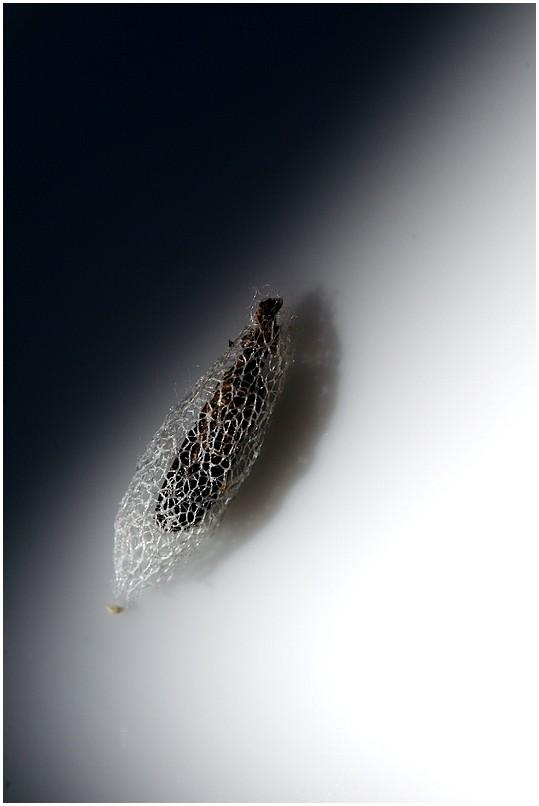 strange seed