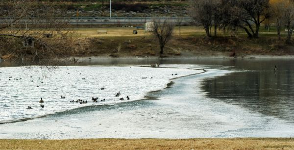 the thawing pond