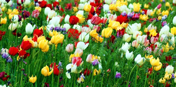 all abloom