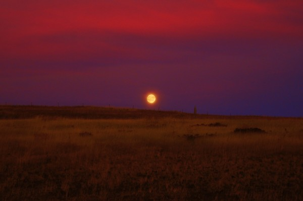 purple haze moonrise