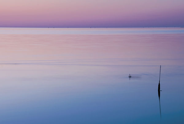 One Fine Evening:  Lone Duck