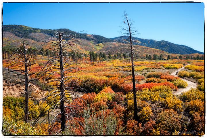 Lama Road - Autumn