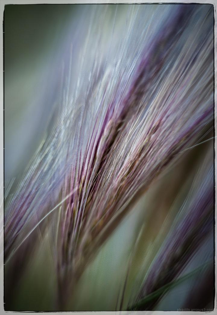 Wild Windy Grasses
