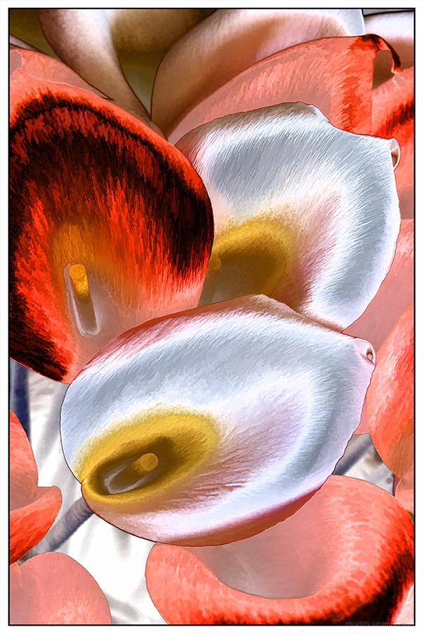 Calla Lilies for Cinco de Mayo