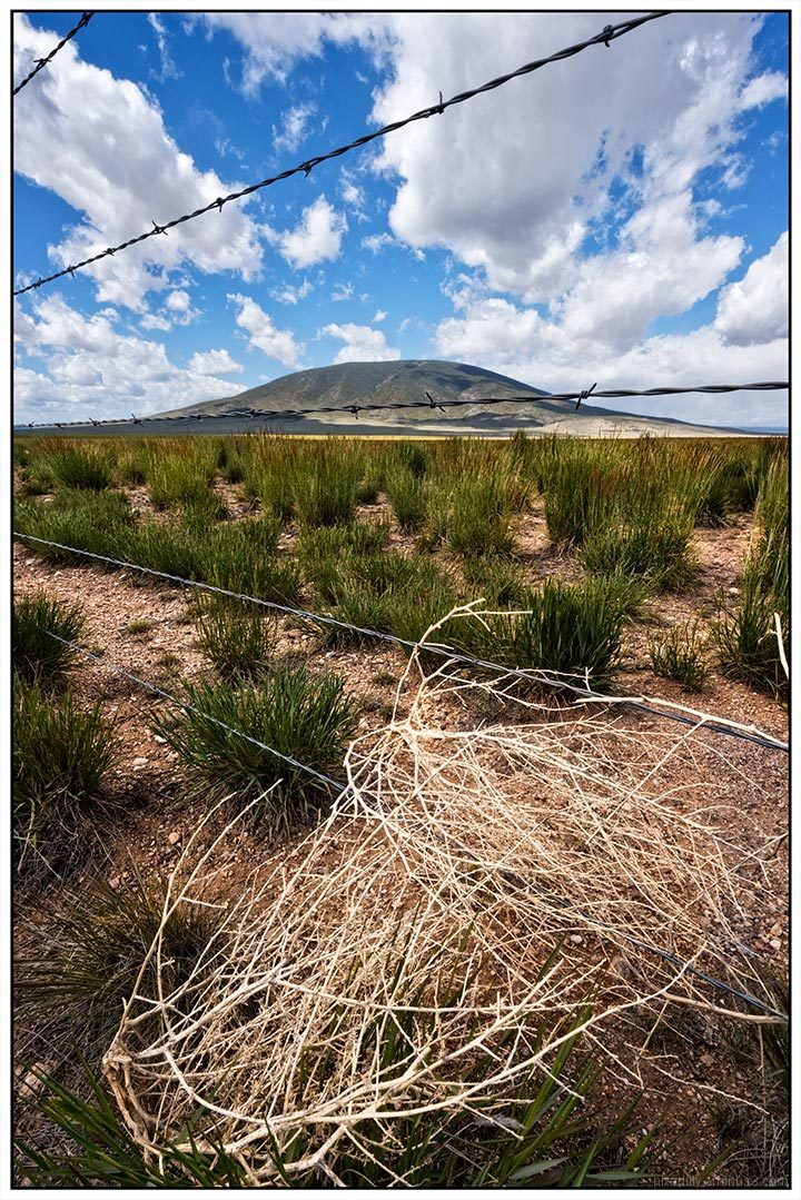 Ute Mountain with Tumbleweed