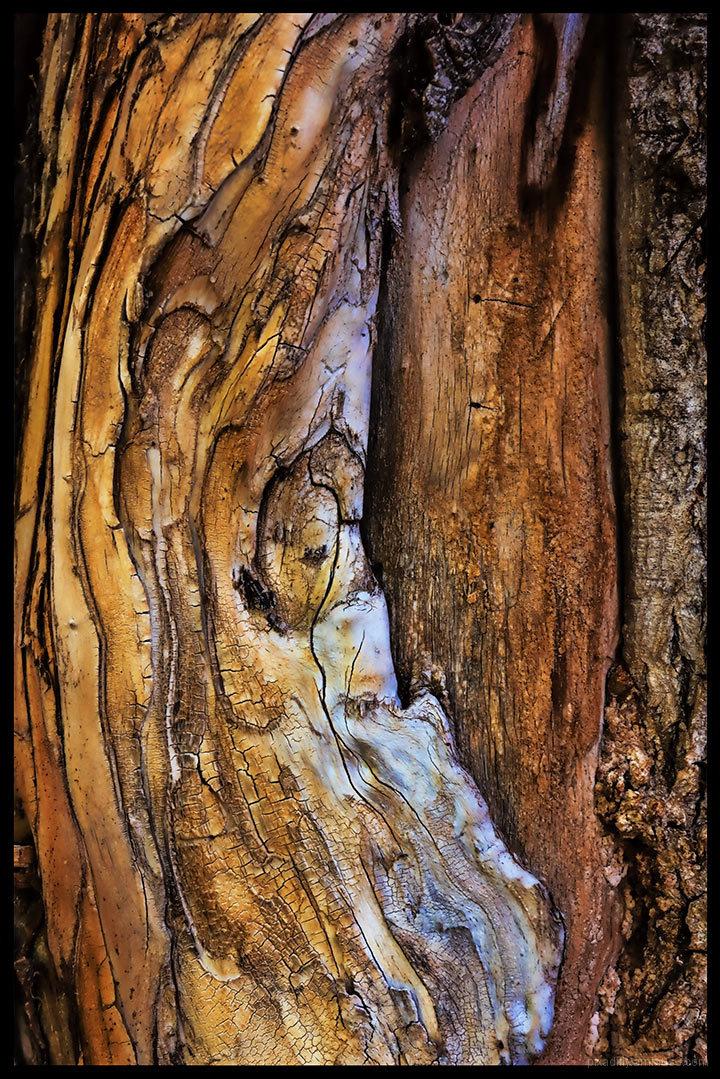 Carson Tree Abstrunkt