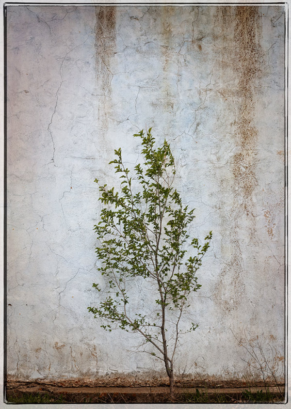 Simple Young Tree