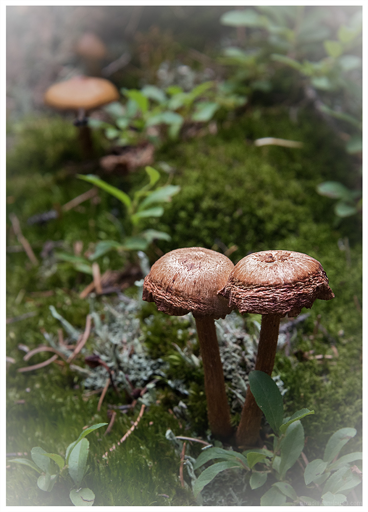 Long-Stemmed Mushrooms