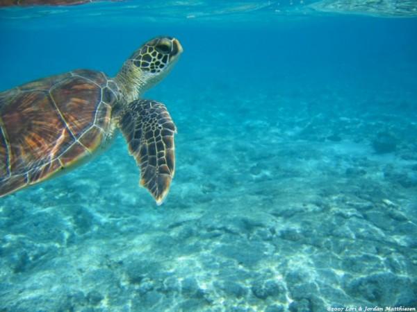 Forever, Jordan's Turtle