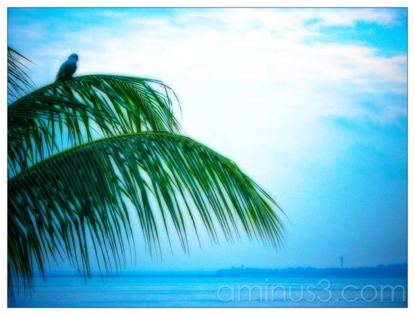 Life – Idling Bird By The Water