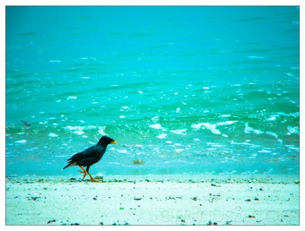 Life – Lone Birdie Walking By The Water