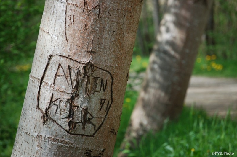 love tag on a tree