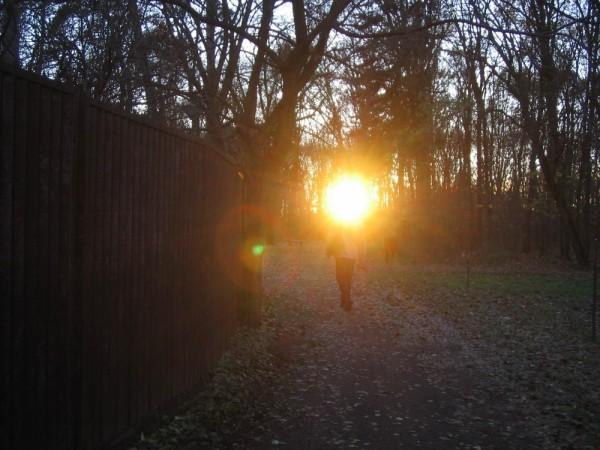 nagyerdő bigforest debrecen porcsin autumn 2007