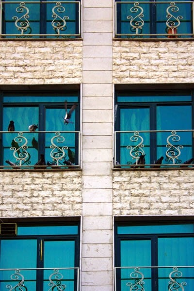 Windows and Birds...
