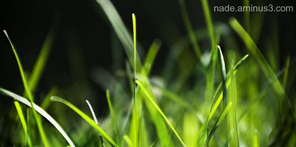 summer gazone