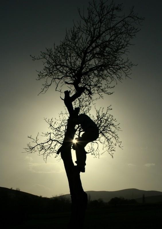 آشیانه خورشید