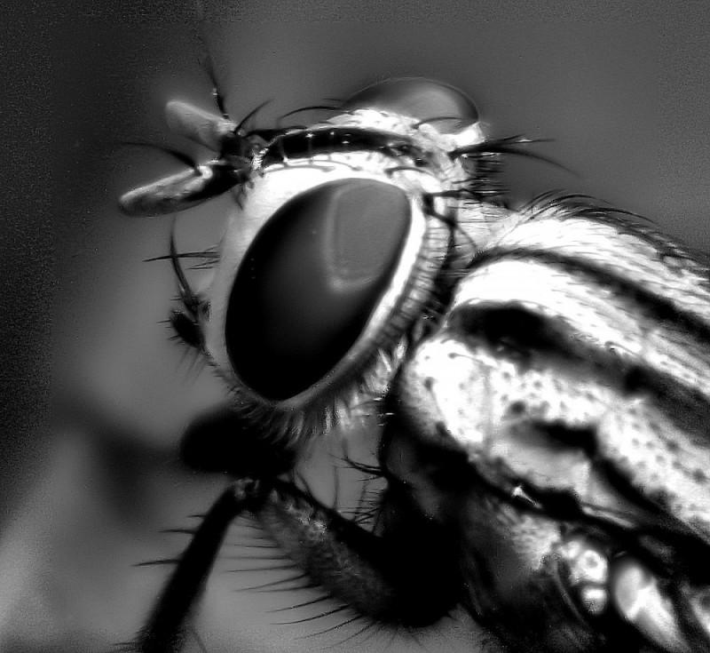 Gardenfly