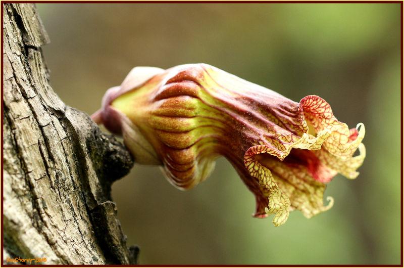 Trunk flower