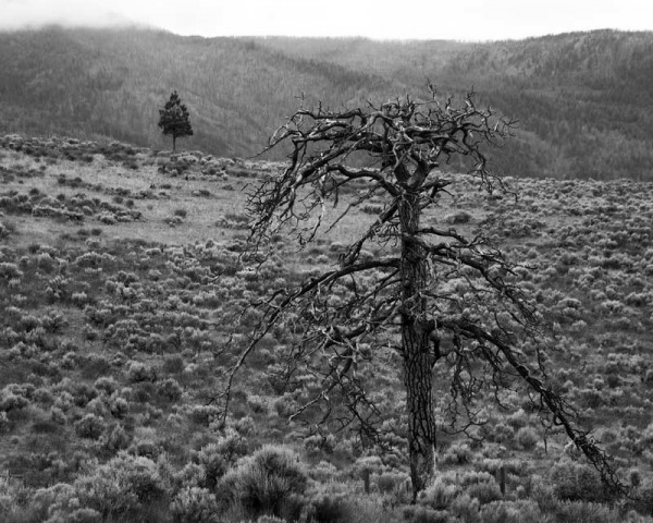 desert tree cache creek