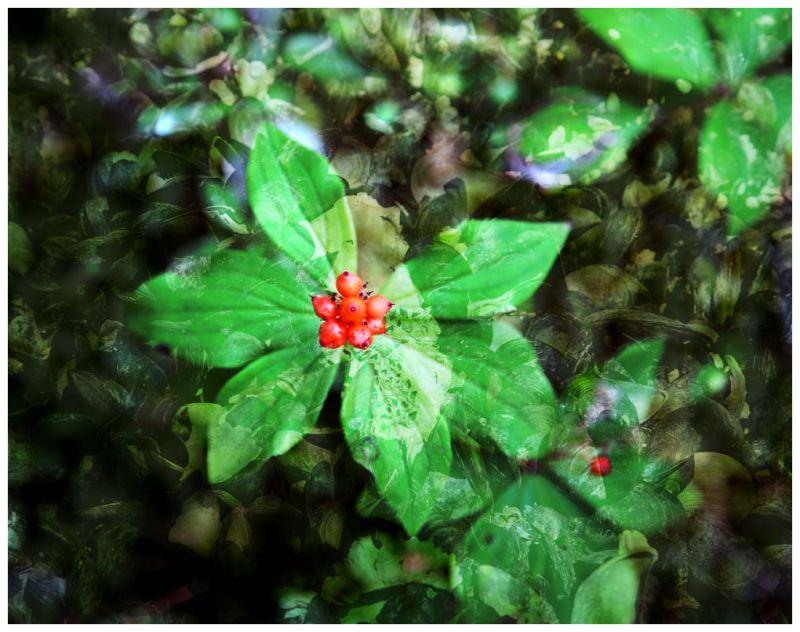 Fleur d' Oyster