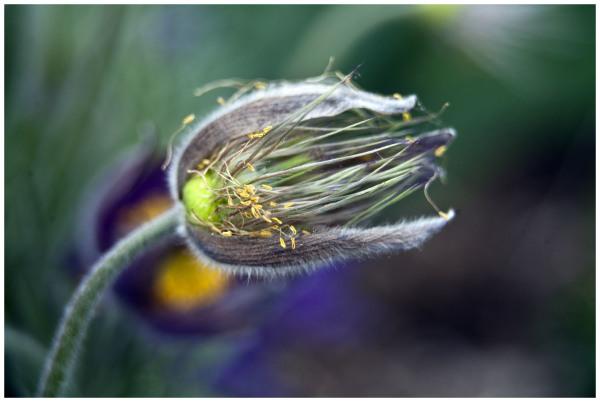 Pass Flower