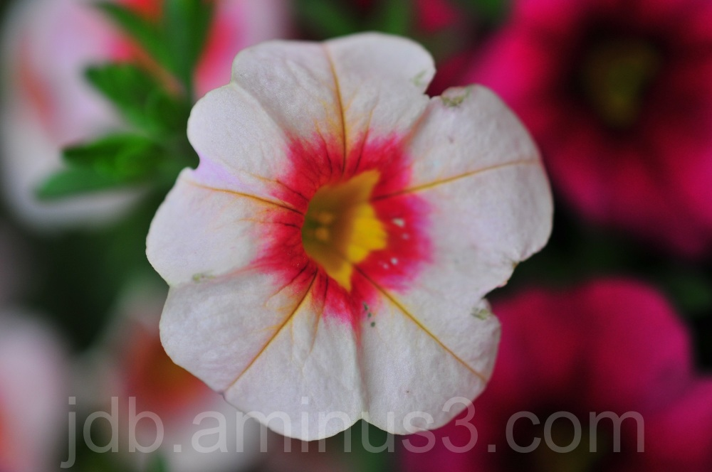 Flower ( I think )