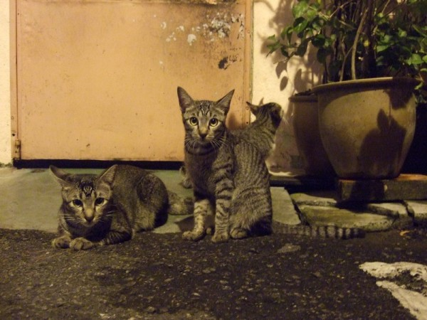 cats at Jonker Walk