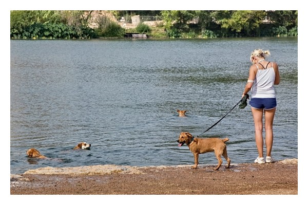 Dogs swimming, Townlake, Austin