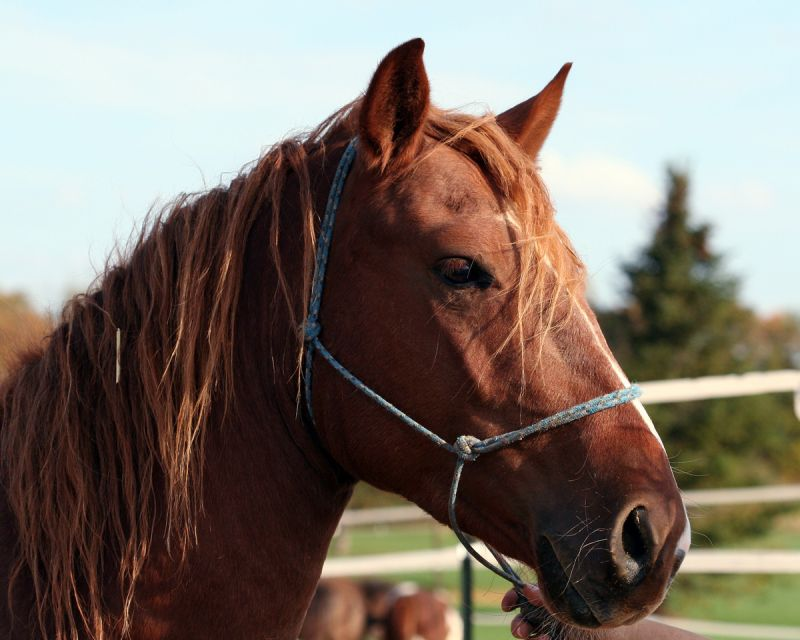 Penny the Horse