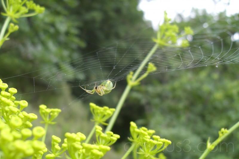 spiderweb macro