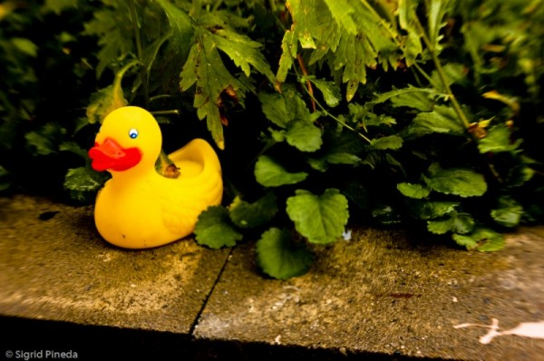Rubber Duckie out of place