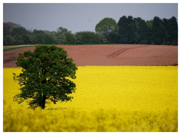 Staffordshire Countryside.