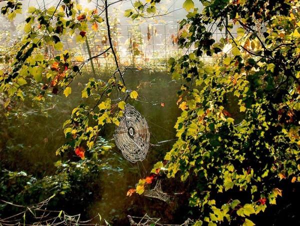 Spider web, Newton, NC