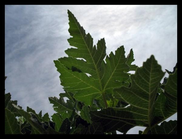nature,larestan