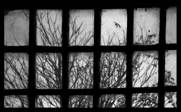 tree,window,abstract