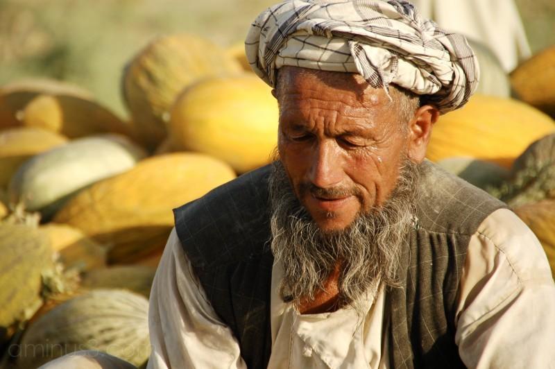 farmer melon harvest north afghanistan