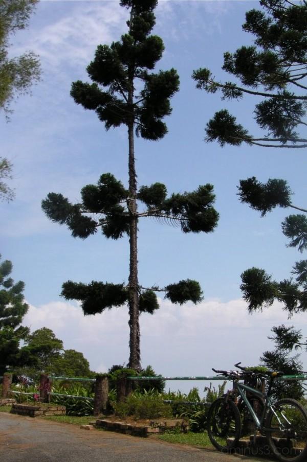 Mount Jerai at kedah,Malaysia